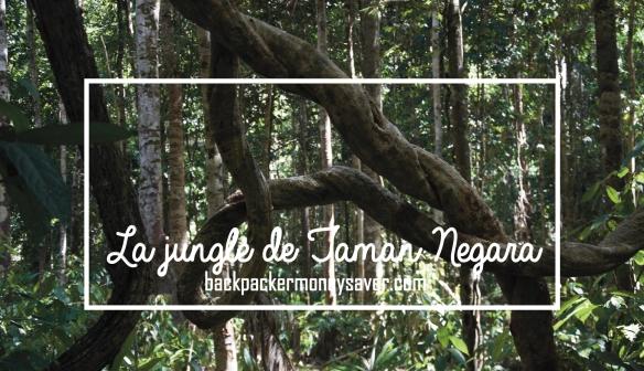 La jungle de Taman Negara