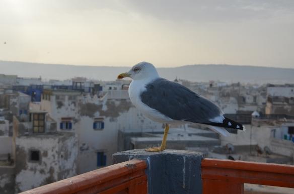 Essaouira- Maroc