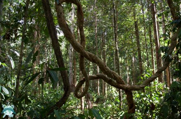 Treck dans la jungle à Taman Negara